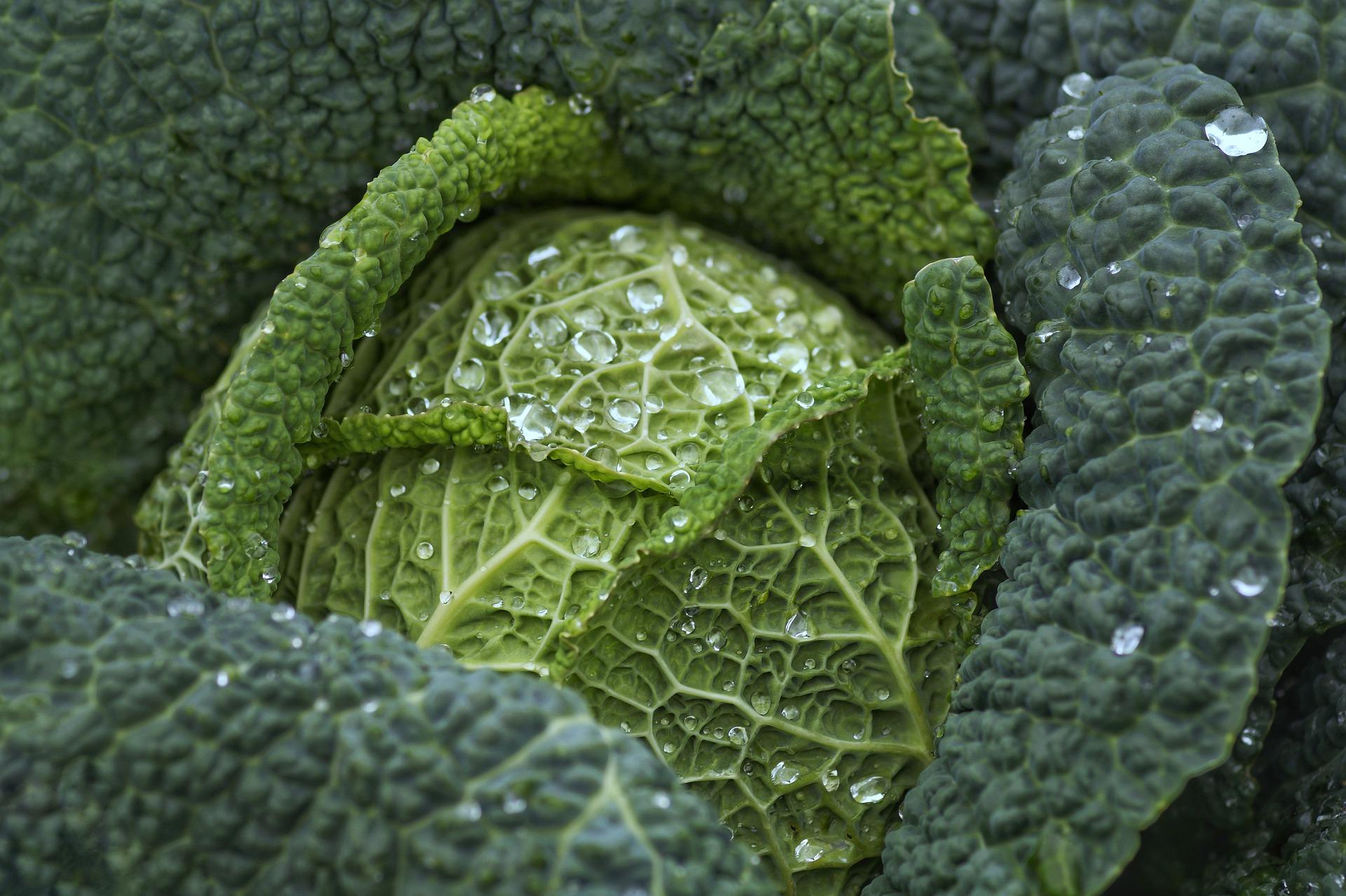 Landwirtschaft und Essen
